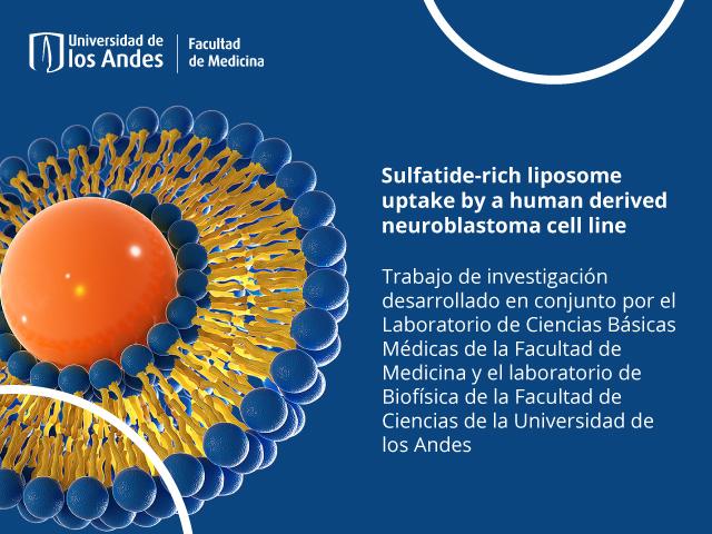 Investigación conjunta sobre liposomas en Uniandes